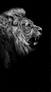lions-roar-1