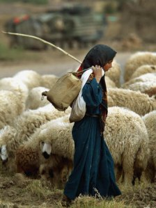 an-iraqi-shepherd-a-young-girl-herds-her-sheep